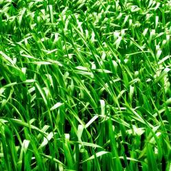 praktisch, quadratisch, Gras