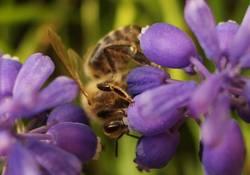 Bee(r)Bar