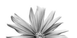 halbe Blume