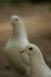 Die Welt gehört den Tauben