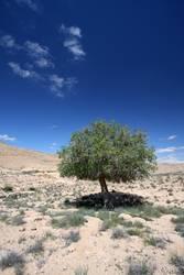 Armer, einzelner Baum ohne Freunde