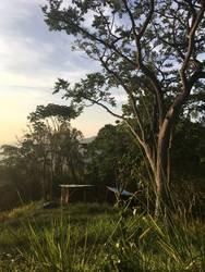 Hütte unter Baum in den Bergen Kolumbiens