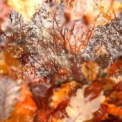 Man sieht den Baum vor lauter Blättern nicht