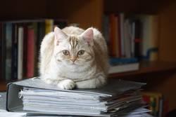 Home-Office mit Katze