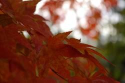 ja ist's denn schon Herbst?