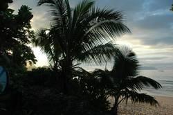 Seychellen-Palmen at dawn