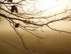 im nebel versunken1