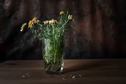 Still life with withered flowers.