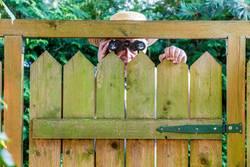 Der neugierige Nachbar