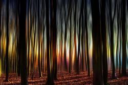 Im Geisterwald bei seltsamen Licht