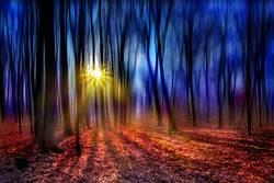 ein Märchenwald im Gegenlicht