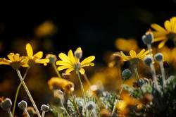 Herbstblumen II