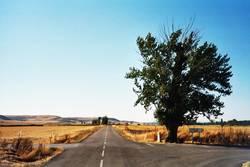 Baum in der spanischen Meseta