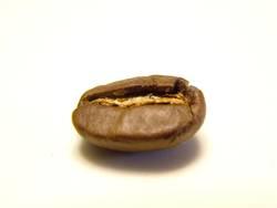 Kaffeeböhnchen