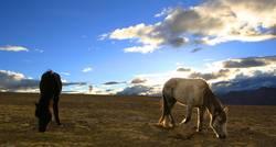 Pferdchen in der Abendsonne
