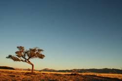 Schau, ein Baum!