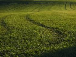 Grüne Spuren im Gras
