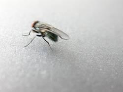 flotte Fliege