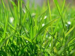 Grünes Gras im Frühling