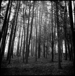 Bäume I