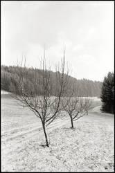 display generic winterly image here
