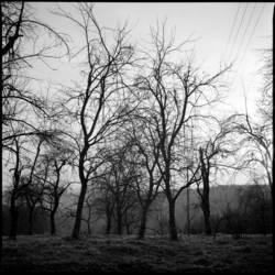 Bäume III
