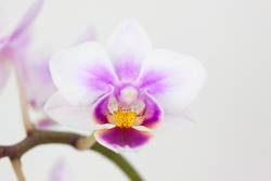 Bluete einer Orchidee