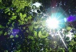 Sonnenstralen