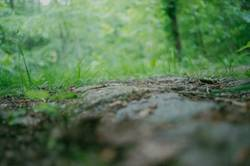 Wald – verborgen