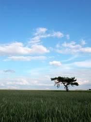 blue sky passes bye