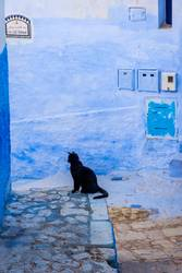 Black cat in blue town, Chefchaouen