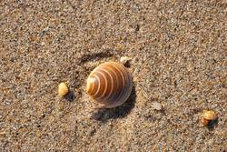 Shell on the sand