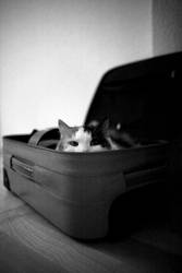 Kofferkatze