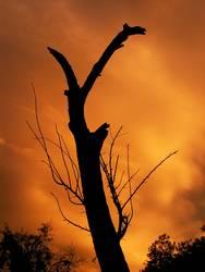 Toter Baum vor lebendigem Himmel
