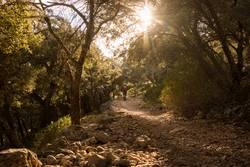 Wandern in der Serra de Tramuntana auf Mallorca