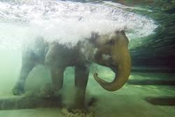 Wasserfant