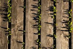 Brettpflanzenschatten