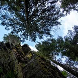 Fels und Bäume