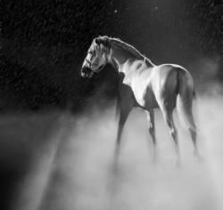 Pferd mit Nebel und Sternen