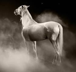 Pferd mit Nebel und Sternen zwei