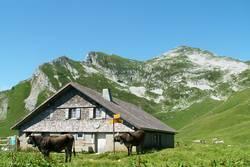 gemütliche Alp