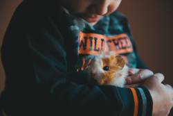 Little guinea pig in the hands of the child