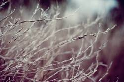 Trockengräser
