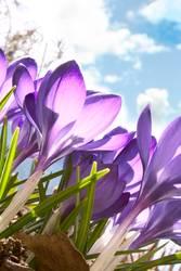 Frühling am Waldrand 1