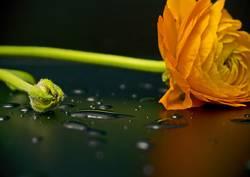Blume mit Tropfen