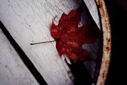 red leaf..