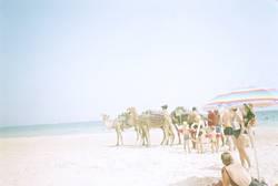 aufsteigende Gerade (mit Kamelen)