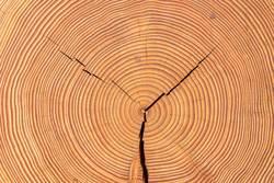 Lebensjahre - Holzscheibe
