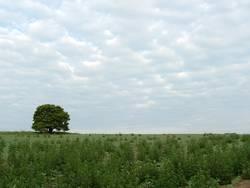 Feld mit Baum