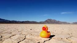 Desert Duck